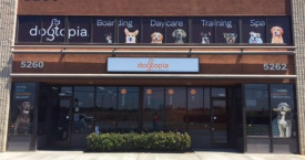 <strong>Dogtopia Franchise, San Diego</strong>